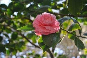 San Fransicso Flower